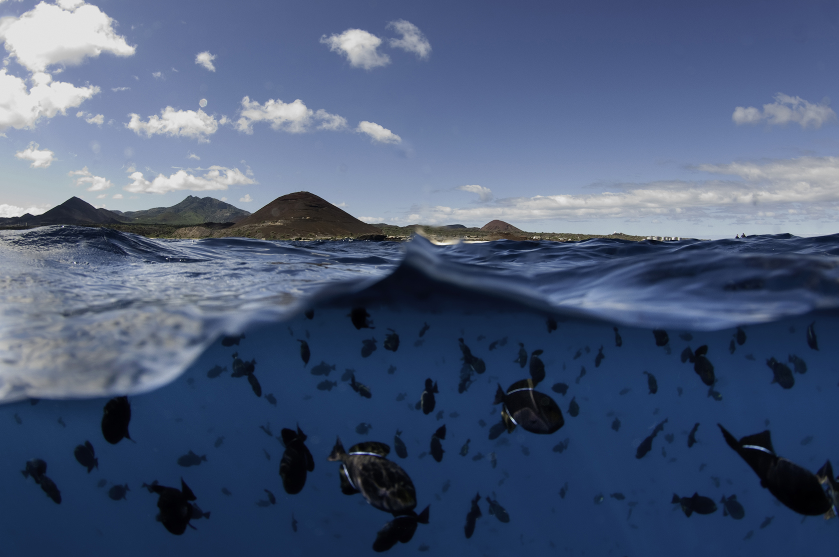 Ascension Island - UK Overseas Territories - Blue Marine Foundation