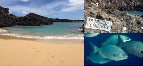 beach-fish-ascension-cb
