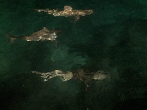 cb-sharks-2-ascension-blog