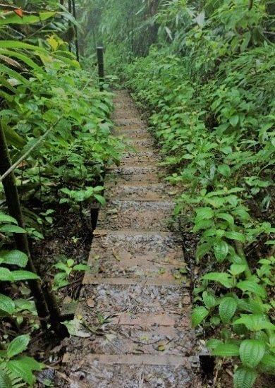 dew-pond-walk-cb-ascension-blog
