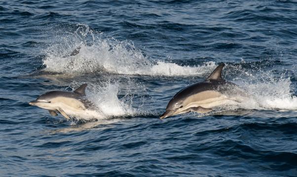 dolphin ocean marine conservation